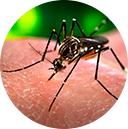 Sobre el virus Zika